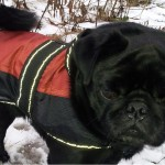 Hund trägt eine Regenjacke